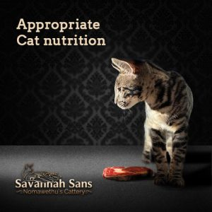 The modern barf cat nutrition